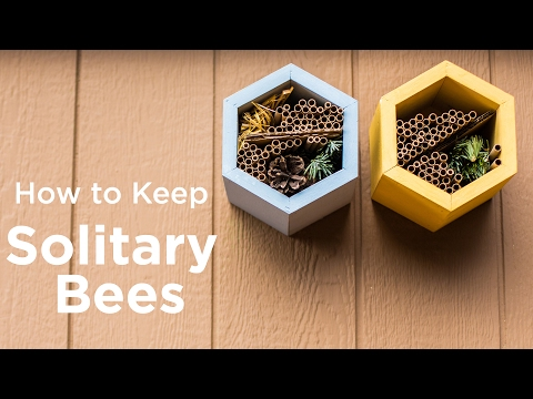 How to Keep Solitary Bees