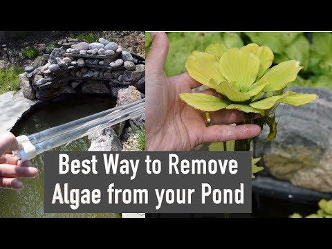 Best Way to Remove Algae from your Pond