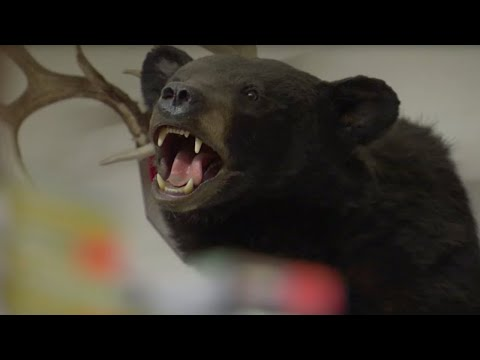 Beware the Bear hunters: Hunting Season | BBC Earth