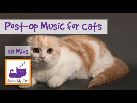 30 Minutes of Music to Help your Cat Relax After an Operation, Soothing Cat Music