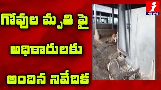 Lab Report On Tadepalli Goshala 100 Cows Died In Vijayawada | iNews