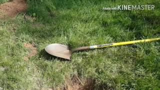 How To Plant A Peach Tree And How To Get Rid Of Ground Hogs In My Gar