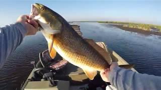 Sight Fishing Delacroix Redfish