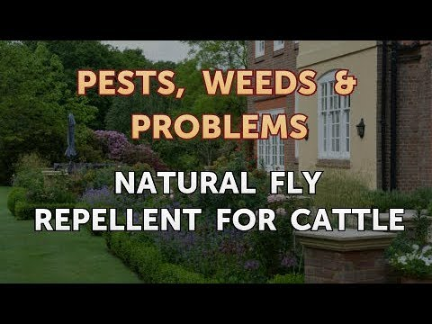 Natural Fly Repellent for Cattle