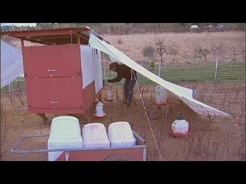 Raising Backyard Chickens - Food and Water Equipment Needs