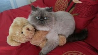 YOU will shake YOUR HEAD like a TORNADO because of laughing - FUNNIEST CAT&PUG COMPILATION