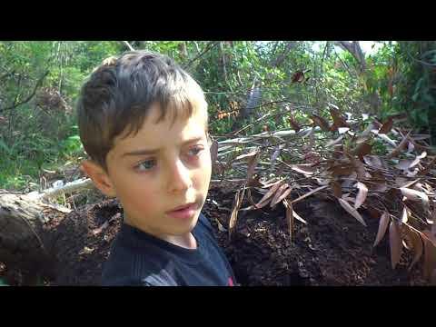 AwA Arboreal (Tree) Termites