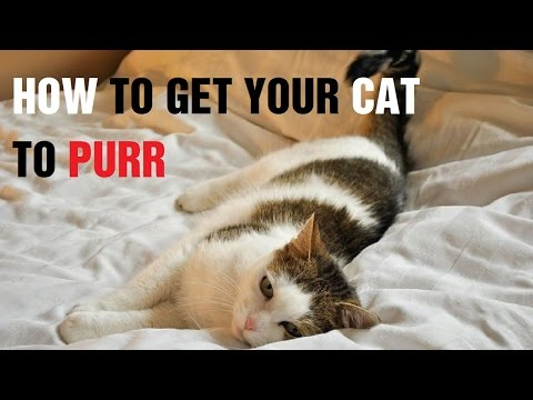 How to Get Your Cat to Purr