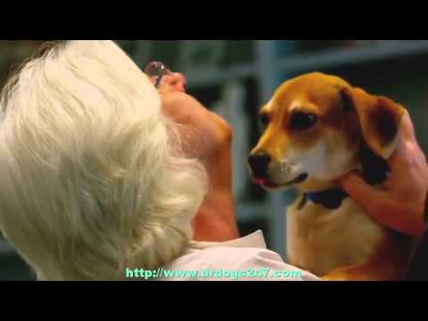 Natural Dog Ear Infection Treatment For Chronic Dog Ear Infection