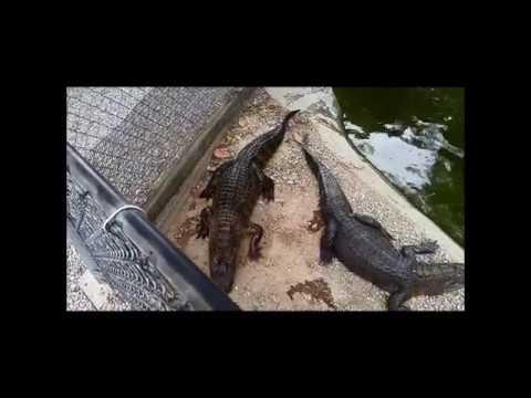 Alligator Farm & Petting Zoo in Hot Springs, AR