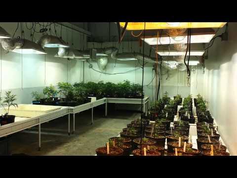 Colorado Springs Grow Vegs and Mothers