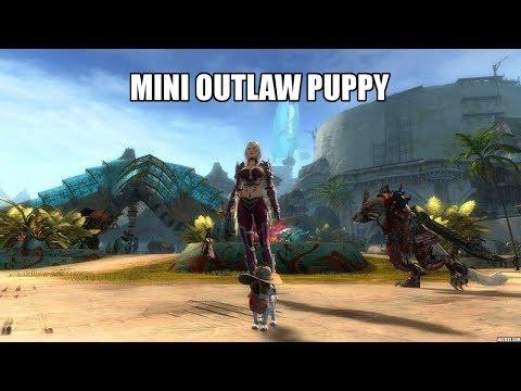 GW2 Mini Outlaw Puppy (400 Gems)