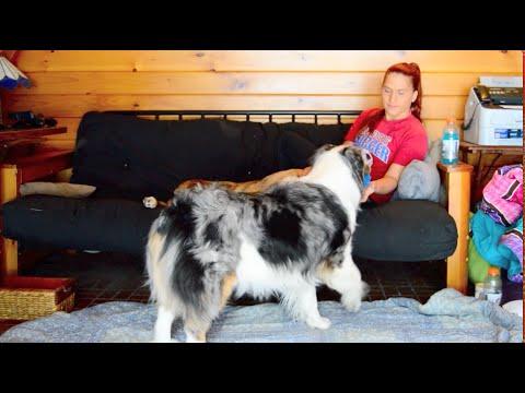 Service Dog Retrieves/Puts Away Medications