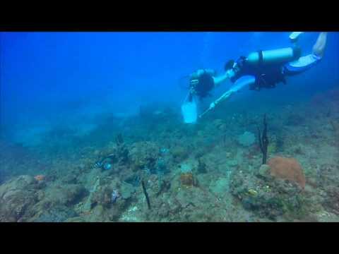 Lionfish roundup! Montserrat, West Indies