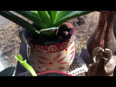 Hydroponic Orchid,Aloe,African Violets,Venus Flycatcher!