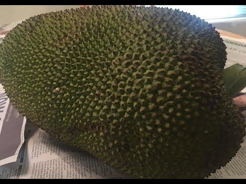 How to cut open a jackfruit