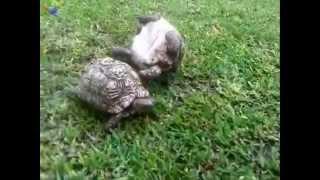 Tortoise helps friend who