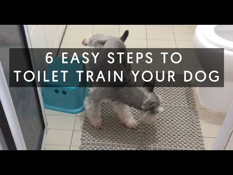 6 Easy Steps To Toilet Train Your Dog.