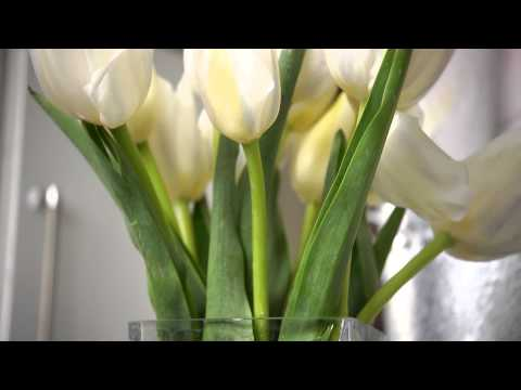 How to Work with Cut Tulips