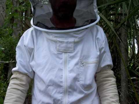 killer bee's