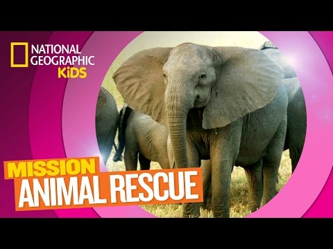 Elephants and How to Save Them 🐘 | MISSION ANIMAL RESCUE