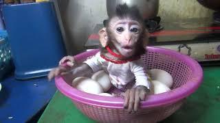 What Happened next when baby monkey nita drink milk