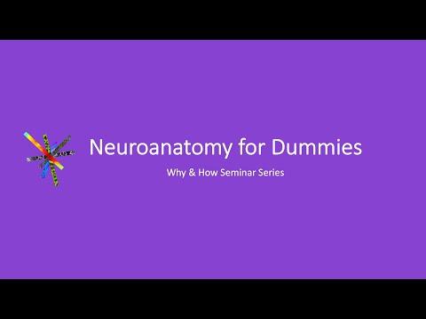 Neuroanatomy for Dummies