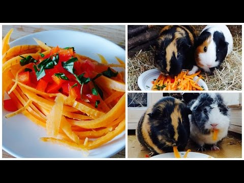 Spaghetti For Guinea Pigs   How to