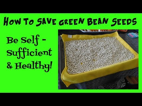 How to Save Green Bean Seeds