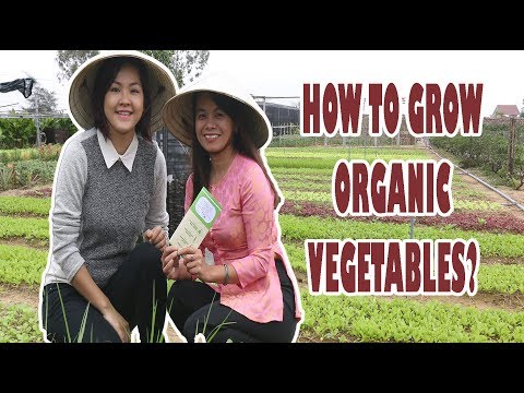 How to Grow Organic Vegetables? A Visit to Hipaya Organic Garden in Hoi An
