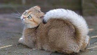 SUPER FUNNY ANIMALS! - Try not to LAUGH or SMILE, IMPOSSIBLE!