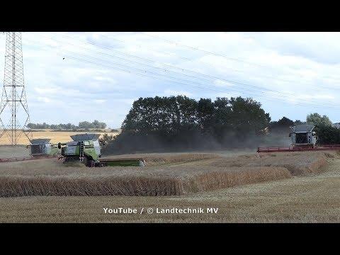 Xxx Mp4 3X Claas Lexion 780TT Getreideernte Grain Harvest 2019 3gp Sex