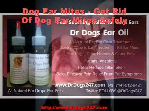 Dog Ear Mites - Get Rid Of Dog Ear Mites Safely