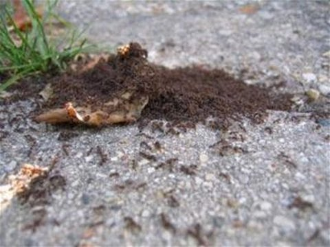 A Guide To Getting Rid Of Ants In Your House