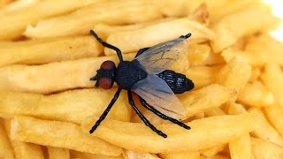 FLY IN FAST FOOD!