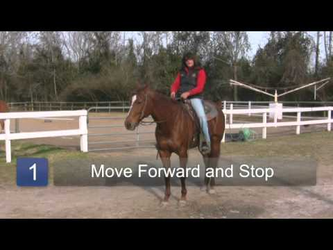 How to Train a Horse to Stop