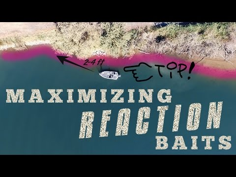 How to Maximize Reaction Baits: Lucky Tackle Box Tips