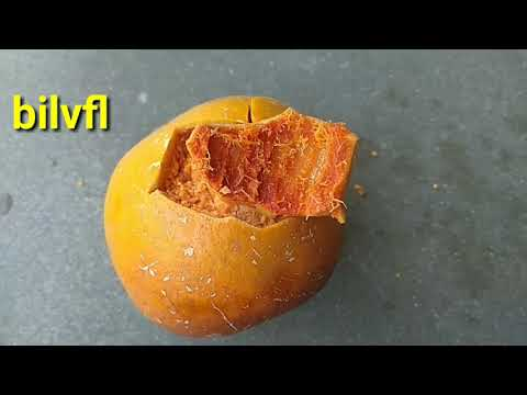Bail tree fruits  mostly use in anemia.