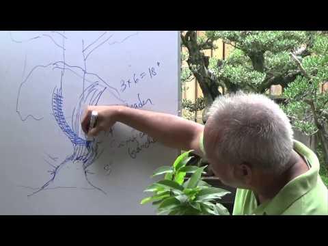 Bonsai Tutorials for Beginners: How to Attain Trunk Taper