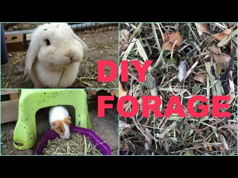 DIY Forage For Pets! | Furry Friends