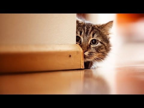 How to Keep Cat from Night Mischief | Cat Care