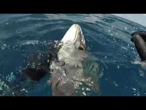 Spearfishing Christmas and Cocos Keeling Islands