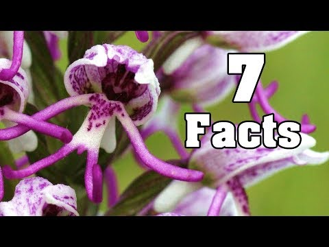 7 Facts about the Orchid