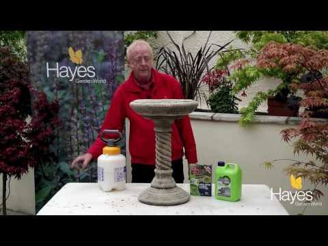 How to clean hard surfaces in the garden