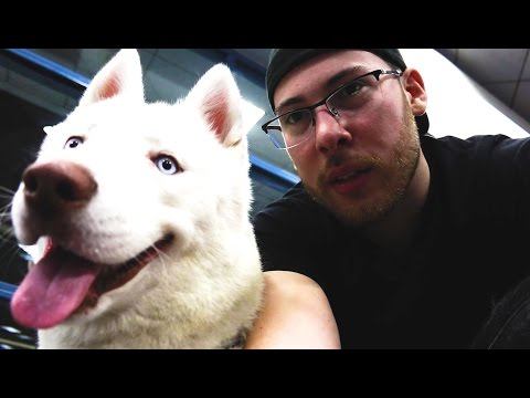 TAKING MY PUPPY ON A PLANE TO MIAMI!
