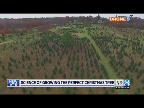 MSU researching how to grow perfect Christmas tree