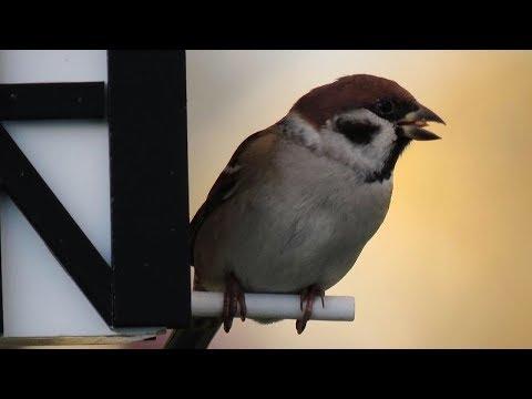 Wildlife Garden Designer Bird House + Feeder