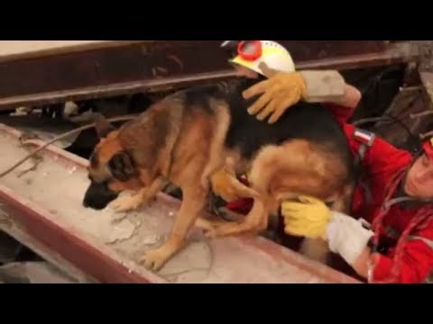 Most Heartwarming Dog Stories of All Time