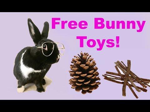 FREE rabbit chew toys!