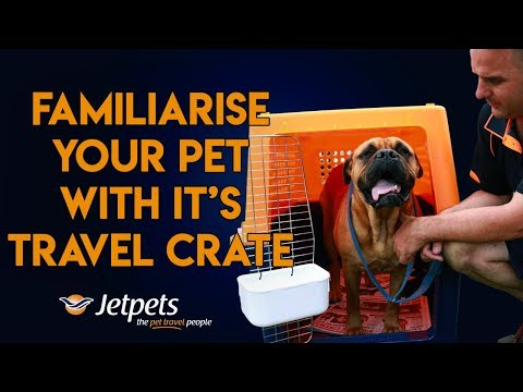 How to Familiarise my Pet with the Travel Crate